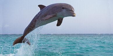 Ben jij een duikboot of dolfijn?